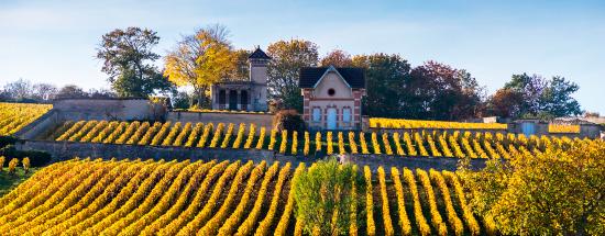 Dégustez CHARDONNAY & PINOT NOIR de Bourgogne et d'ailleurs