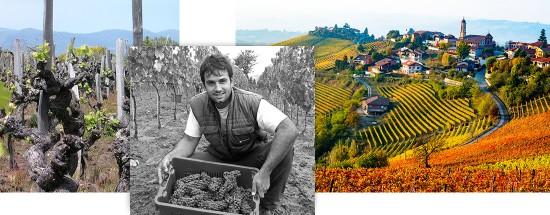 Dégustation et découverte des Grands Vins d'ITALIE