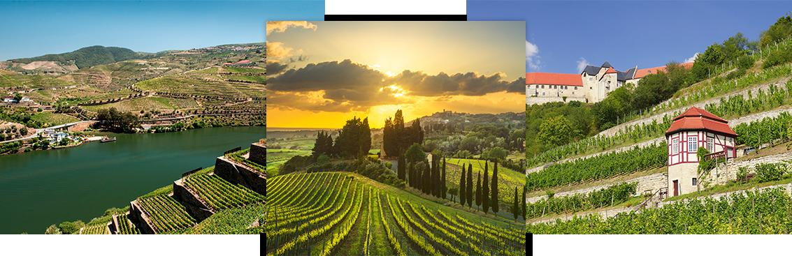 Notre sélection de grands vins Etrangers | walter-wine.com