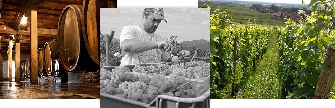 Sélection de grands vins d'Alsace | Walter Wine