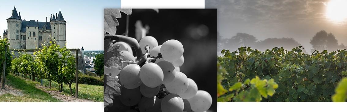 Vente vins de Loire : acheter les meilleurs vins avec Walter Wine